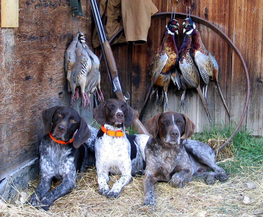 Особенности пород собак для охоты
